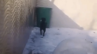 Dog Takes Leap of Faith, Ends Up Falling Into Bin - Video