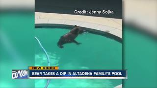 Bear takes leisure swim in Altadena