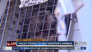 Vegas couple driving to Houston to help victim's animals - Video