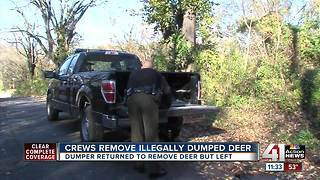 Crews remove illegally dumped deer near 18th & Vine - Video
