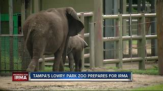Final Hurricane preparations underway at Tampa's Lowry Park Zoo - Video