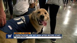 Brewers fans and their dogs excited after team's best 50-game start in franchise history