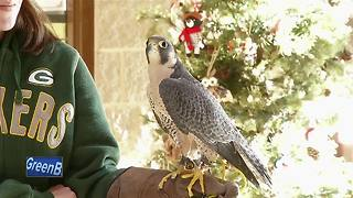 Bay Beach Wildlife Sanctuary offers winter activities - Video