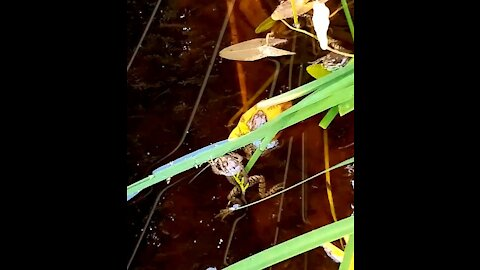 New residents of our pond