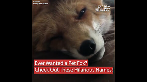 Want a Pet Fox? Let's Settle on a Name!