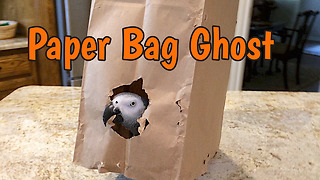 Creative parrot dresses as paper bag ghost for Halloween