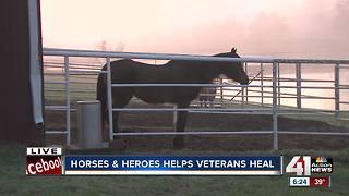 Local organization Horses & Heroes helps veterans heal - Video