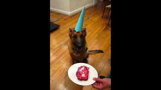 Time lapse: German Shepherd growth from 8 weeks to 1 year - Video