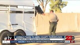 Animals evacuated to Kern County Fairgrounds after multiple fires - Video