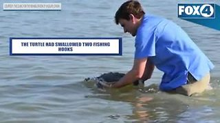 CROW releases two recovered sea turtles in Collier County - Video
