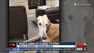 Sting the dog wants friends - Video