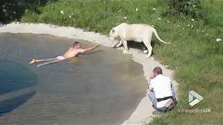 Viral Video UK: Bathing with the lions of Taigan