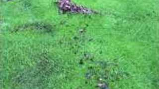 Waterbed Forms on Golf Course in Black Mountain, North Carolina - Video