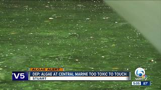 High toxin levels sampled at Central Marine - Video