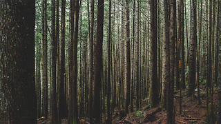 These Trees Will Grow Around Whatever Stands In Their Way - Video