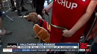 Dog Halloween parade helped aid hurricane victims - Video