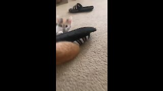 Adorable little kitten gets head stuck inside sandal