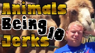 Animals Being Jerks #10 - Video