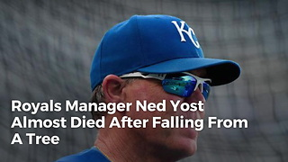 Royals Manager Ned Yost Almost Died After Falling From A Tree - Video