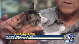 Pet of the day for July 16th - Darla the kitten - Video