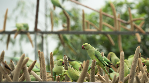 The 'Birdman' Of Gujarat Feeds Thousands Of Birds Every Day