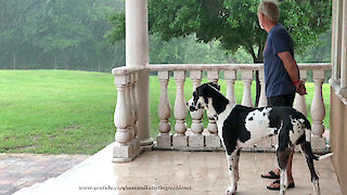 Great Dane Puppy Watches Florida Thunderstorm
