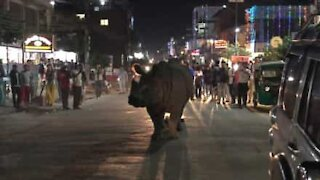 Rhino casually walks on busy street