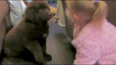 Sweet little girl meets her new giant puppy