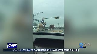 Brave girl chases after fleeing racehorse in Glen Burnie