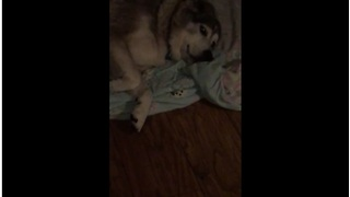 Lazy Dog Makes It Clear He's Not Getting Up - Video
