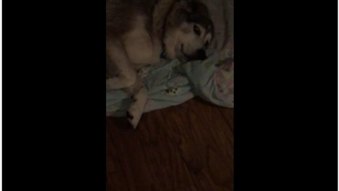 Lazy Dog Makes It Clear He's Not Getting Up