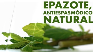 Epazote, antiespasmódico natural - Video