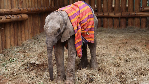 Orphaned Baby Elephant Saved From Starvation | WILDEST ANIMAL RESCUES
