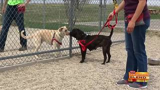 Tips on Reading Canine Body Language - Video