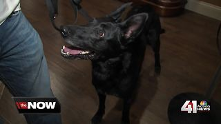 Company allows parents to rent drug-sniffing dog - Video
