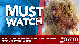 Mangy Street Dog Looks Completely Different After Life-Saving Haircut - Video