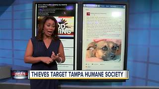 Thieves target Tampa Bay Humane Society after Irma - Video