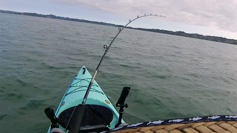 Fisherman's GoPro films crazy moment 13ft shark towed his kayak for 500 metres