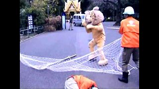 Catch the Lion Man! Catch the Lion Man! - Video