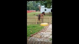 Horse scratches his rear on fence - Video