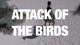 Attack of the Birds - Video