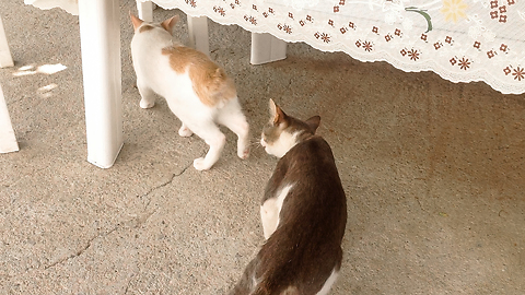 Unsuspected Kitten Gets Attacked By A Wild Cat