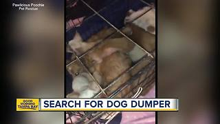 9 dogs found stuffed in small crate, abandoned
