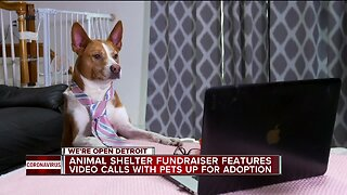 Animal shelter fundraiser features video calls with pets up for adoption