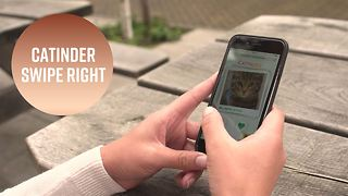 The app making love connections for shelter cats - Video