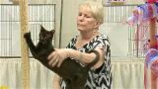 Levels Of Competition In A Cat Show - Video