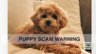 Warning signs of a puppy scam