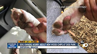 Imperial Beach dog owners upset about wood chips at dog park