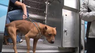 Dogs affected by Hurricane Harvey arrive in MD, looking for new homes - Video