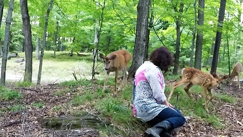 Wild Doe Introduces Her Fawn To Woman Sitting In The Forest